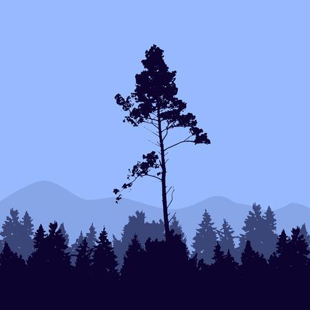 Pine tree national park landscape.