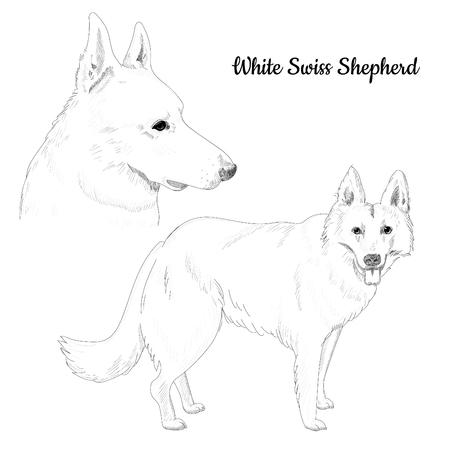 Purebred dog portrait artistic illustration hand drawn