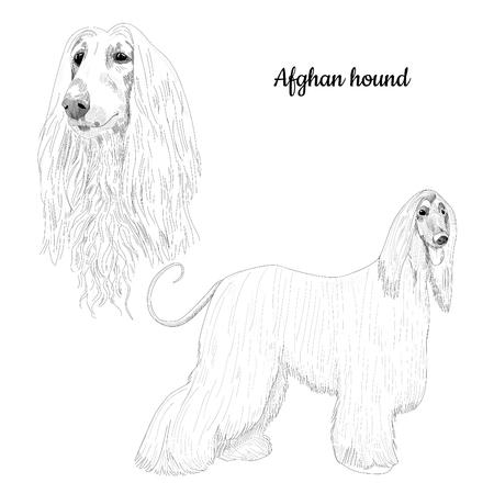 Hand drawn portrait of purebred canine illustration Illustration