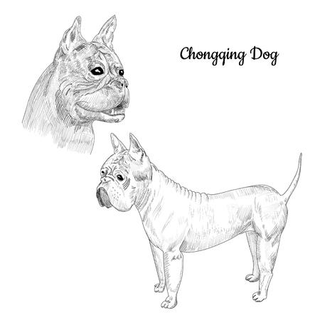 Hand drawn dog portrait of rare breed.