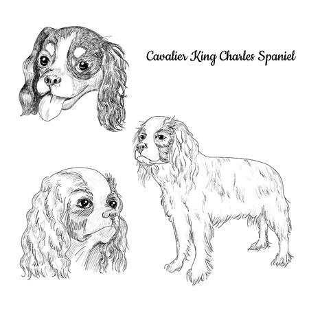 キャバリア ・ キング ・ チャールズ ・ スパニエルの肖像画のセットです。