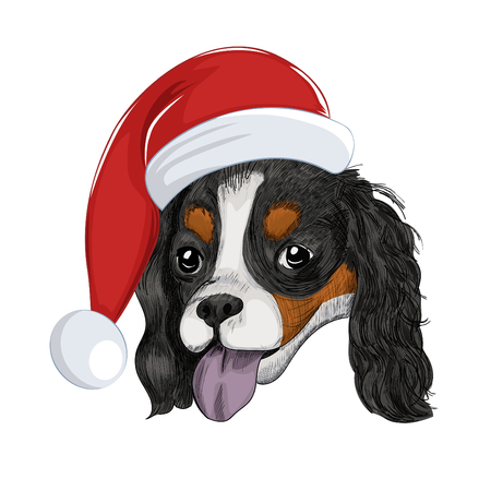 Cavalier King Charles Spaniel wears Christmas holiday hat.