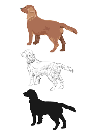 Cocker spaniel in three different styles isolated on white background. Side view of russian cocker spaniel dog.