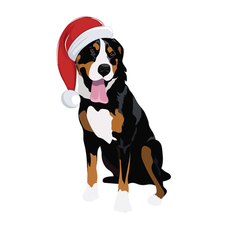 Swiss Mountain dog with Christmas hat isolated on white background. Purebred dog panting and wearing Santa hat.