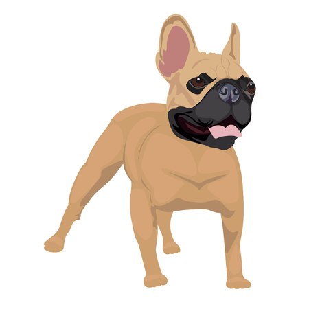 French Bull Dog illustration