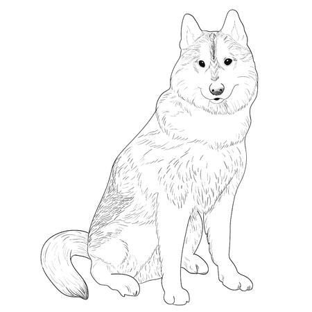 Dog sitting Stock Vector - 92616576
