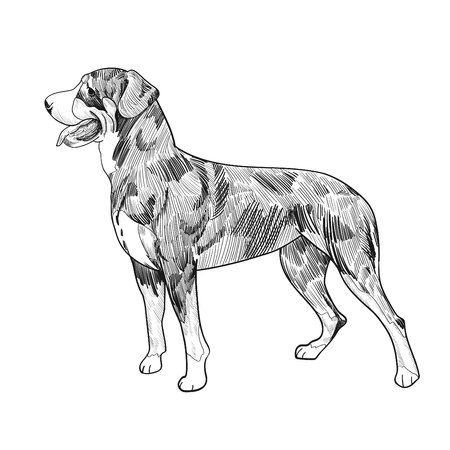 Swiss mountain dog hand drawn sketch isolated on white background. Purebred dog panting.