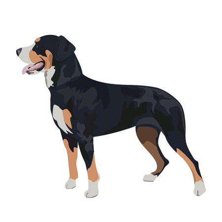 Purebred dog panting.