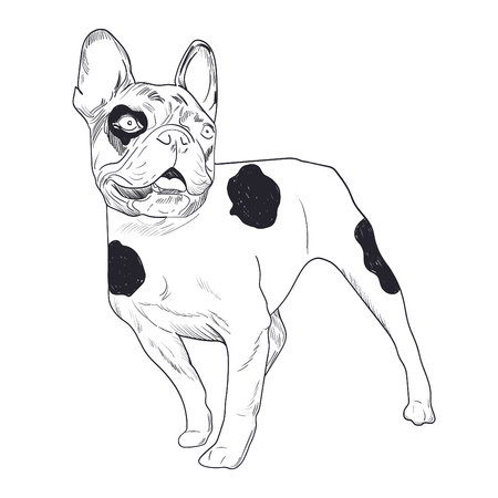 Spotted dog Illustration