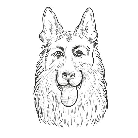Dog head hand drawn sketch