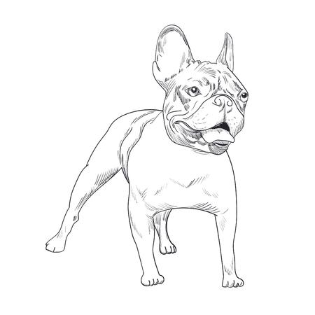 Dog artistic outline illustration Иллюстрация