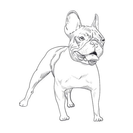 Dog artistic outline illustration Illustration