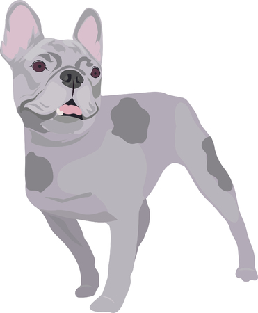 Spotted purebred dog outline illustration.