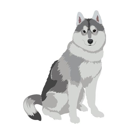 Sled dog illustration.