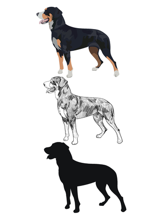 Swiss mountain dog in three different styles isolated on white background. Purebred dog silhouette.