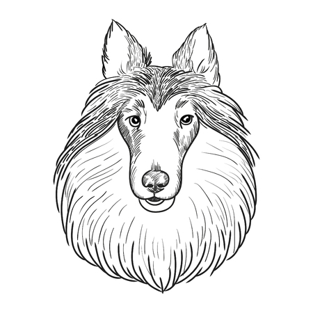 Sheltie hand drawn sketch.
