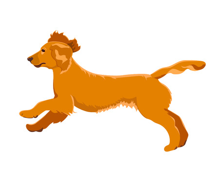 Cocker spaniel running isolated on white background. Cute purebred puppy jumping. Illustration