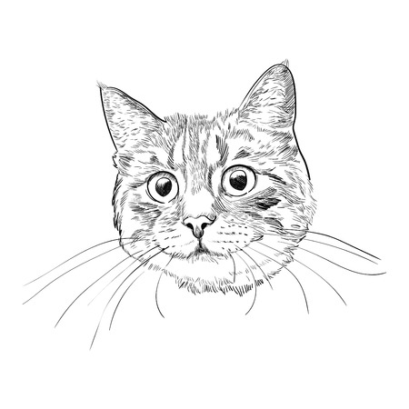 Croquis dessiné main tête de chat mignon. Visage de chat avec longues moustaches isolé sur fond blanc. Vecteurs