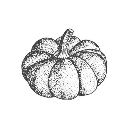 Pumpkin isolated on white background. Autumn symbol squash hand drawn sketch.
