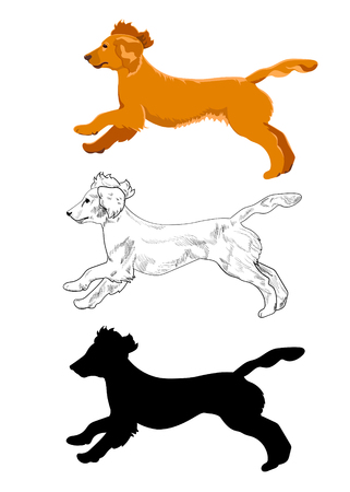 Side view of english cocker spaniel dog.