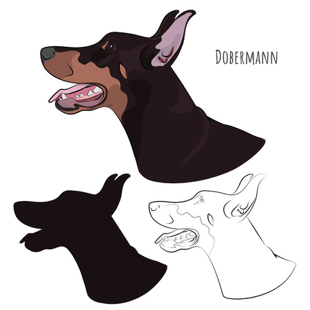 Dobermann panting with tongue out. Watchdog profile for your design.