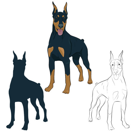 Dobermann standing and panting with tongue out. Watchdog for your design. Vettoriali