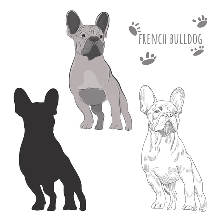 Gray french bulldog standing isolated on white background. Иллюстрация