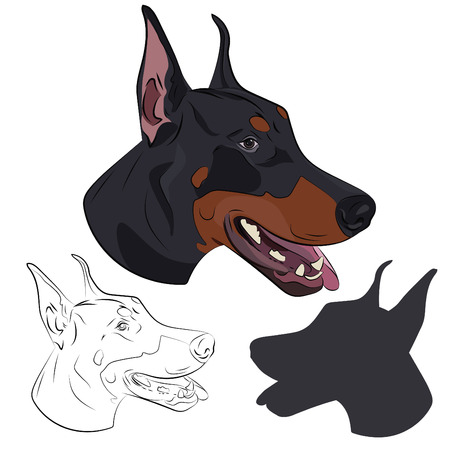 Dobermann panting with tongue out. Watchdog portrait for your design. Doberman Pinscher face isolated on white background. Silhouette, sketch and color illustration. Vettoriali