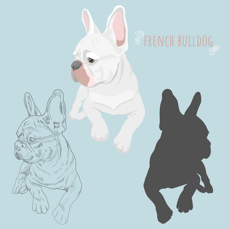 White french bulldog lying isolated on baby blue background. Dog silhouette and hand drawn sketch of purebred canine. Illustration