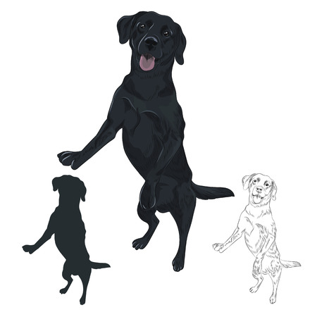 Black labrador dog jumping isolated on white background. Playful purebred canine hand drawn sketch.