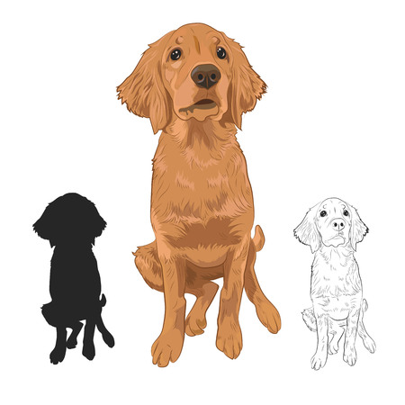 Golden Retriever puppy isolated on white background. Cute purebred puppy hand drawn sketch and silhouette.