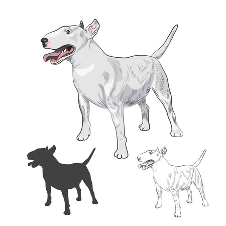 Bull Terrier dog breed isolated on white background. Purebred canine in sketch and silhouette for your design.