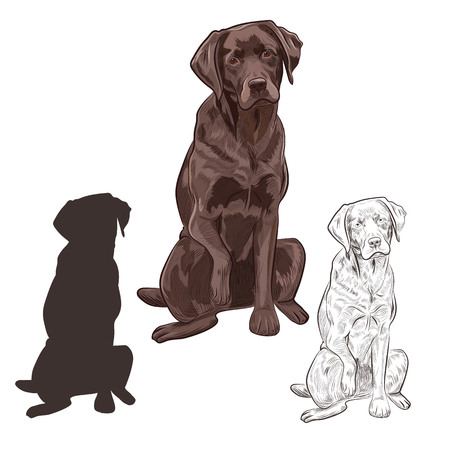 Brown labrador dog sitting isolated on white background. Friendly purebred canine hand drawn sketch.