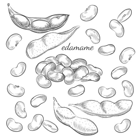 Edamame hand drawn sketch in vector. Edamame beans and pods isolated on white background.
