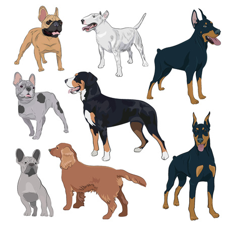Standing dogs collection isolated on white background. Purebred canines set for your design. Bulldog, doberman, spaniel, bull terrier and swiss mountain dog. Illustration