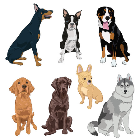 Sitting dogs collection isolated on white background. Purebred canines set for your design. Boston terrier, doberman, husky, bulldog and labrador.