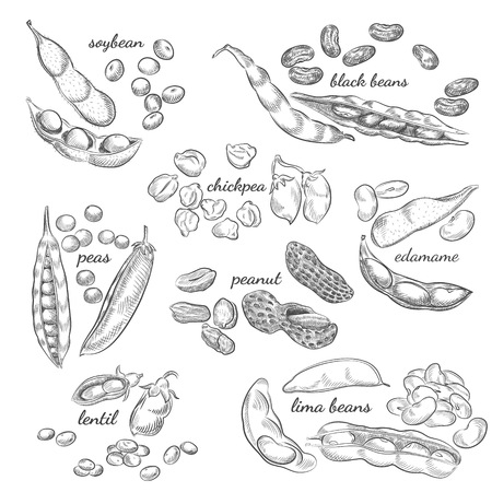 Croquis de noix, pois, haricots, gousses et coquilles isolés sur fond blanc.