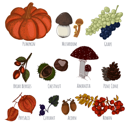 Autumn harvest, pumpkin, mushrooms, grape and wild berries for your design.