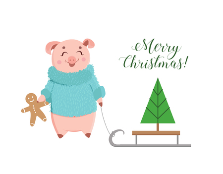 Cute piglet in a fluffy sweater holding ginger cookie. Christmas holiday season piglet with tree on sled.