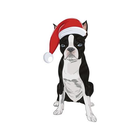 Boston Terrier wearing Santa hat isolated on white background. Santa dog in Christmas mood. Illustration