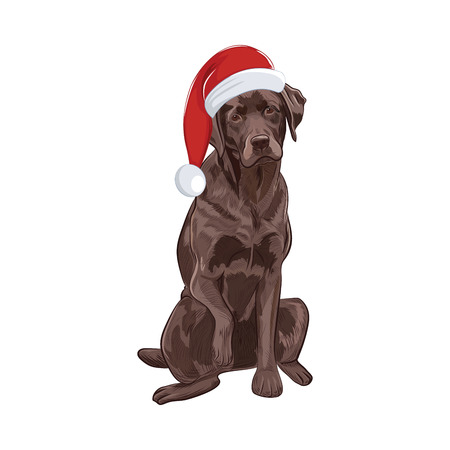 Chocolate labrador in santa hat sitting and giving a paw. Brown dog isolated on white background. Adorable Santa dog for your design.