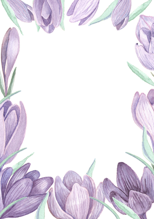 Saffron flowers on white spring tender background. Hand painted watercolor crocus floral wedding invitation template. 写真素材