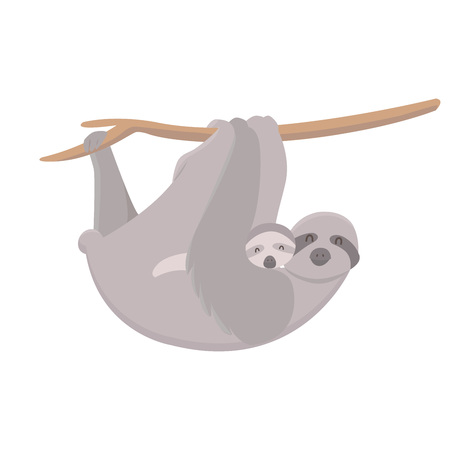 Cute mother sloth with her child hanging on tree branch. Parent concept.
