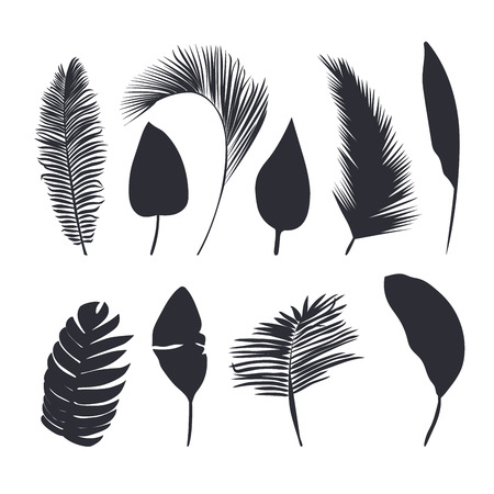 Tropical leaves silhouette collection.