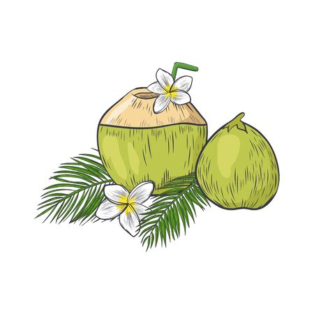 Green coconut with straw to drink milk. Coconut with plumeria flower and palm leaves isolated on white background.