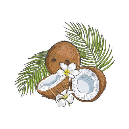 Brown coconut with tropical flowers and leaves closeup. Old coconut half cracked with tropical leaves isolated on white background.