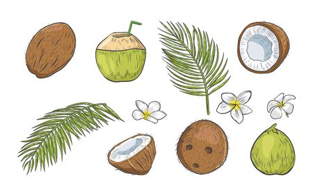Green and brown coconut isolated on white background. Tropical elements collection. Иллюстрация