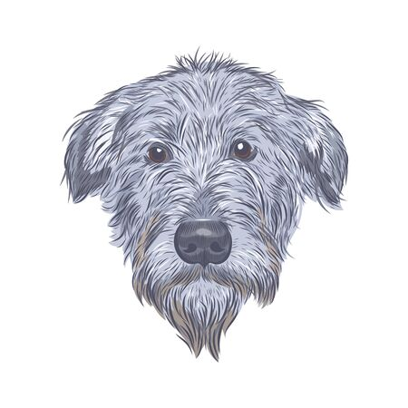 Wolfhound face vector sketch. Vector Illustration