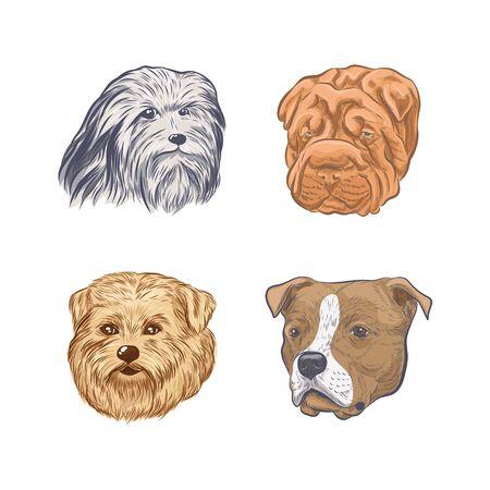 Purebred dog faces isolated on white background.