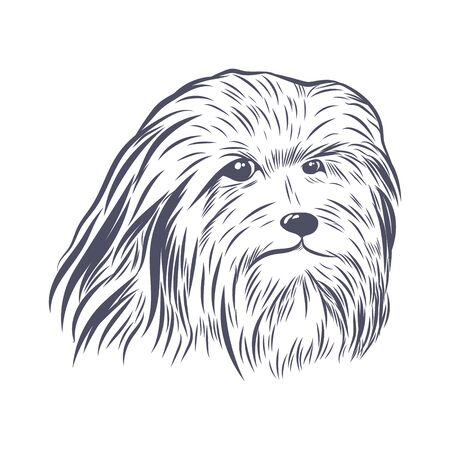 Lion bichon head hand drawn vector sketch. Bearded collie face isolated on white background. Illustration